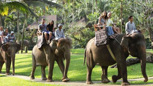 Bali Elephant Ride and Ubud Tour