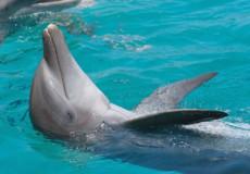 Dolphin -Swim-Tour-bali-tour