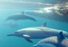 Dolphin-Swim Tour-bali-tour