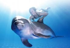 Dolphin-Swim-Tour- bali-tour