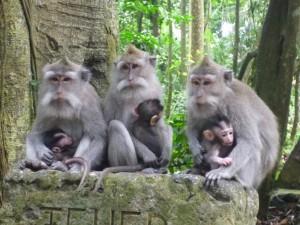 Ubud-Monkey-Forest-bali-tour