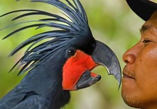 bali-bird-park- bali-tour