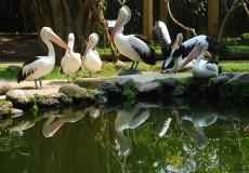bali-bird-park-bali- tour