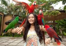 bali-bird-park-bali-tour