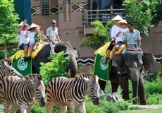 bali-safari-marine-park-bali tour