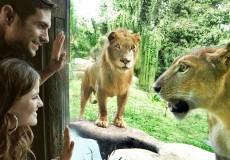 bali zoo-park-bali-tour