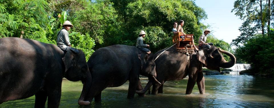 Bali Zoo Park Tour Bali Tour Operators