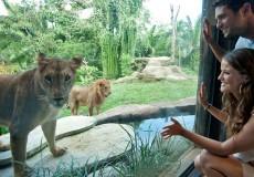 bali-zoo-park-bali-tour