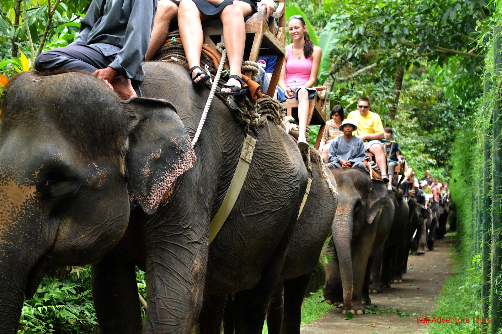 elephant riding Trans-atlantic is at it again, this time in the golden triangle region of chiang rai thailand while guests of the tented camp we were trained by real.
