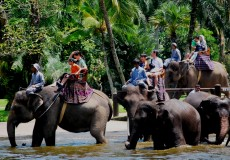 elephant-ride-bali tour