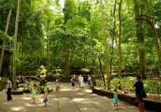 ubud-monkey-forest-bali_tour